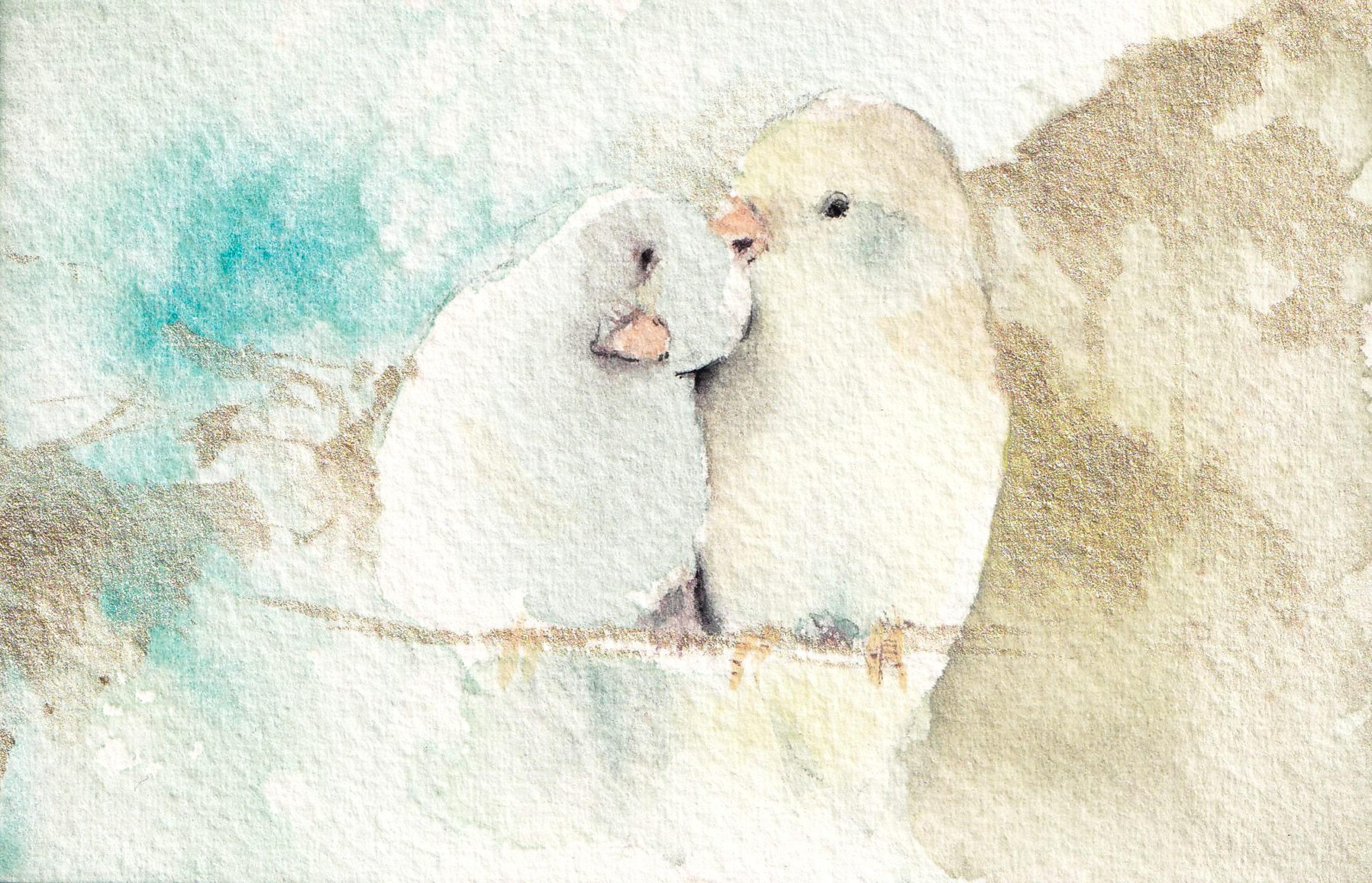 Lovebird illustration